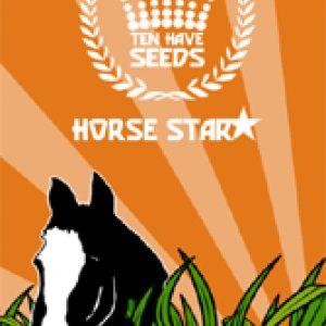 HORSE STAR PAARDENWEIDE 15KG.